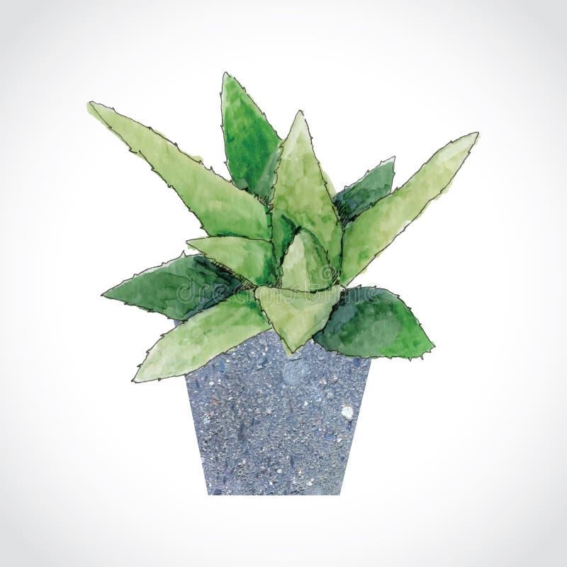 Planta do aloés no potenciômetro de pedra fotos de stock