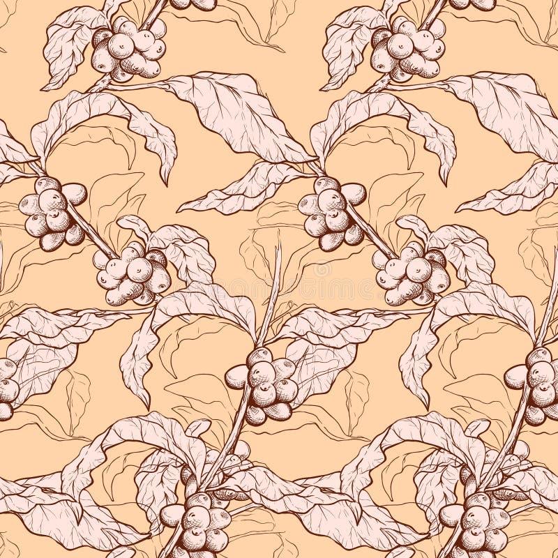 Planta do café e teste padrão dos feijões ilustração royalty free