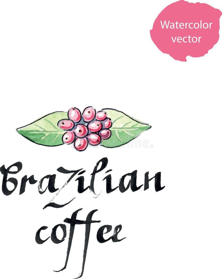 Planta do café, goma-arábica do Coffea, folhas e bagas ilustração royalty free