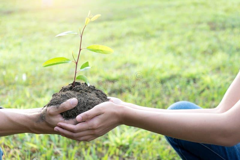 Planta do homem novo e da mulher uma árvore fotografia de stock royalty free