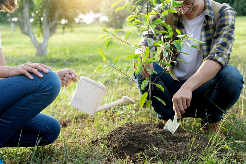 Planta do homem novo e da mulher uma árvore imagens de stock