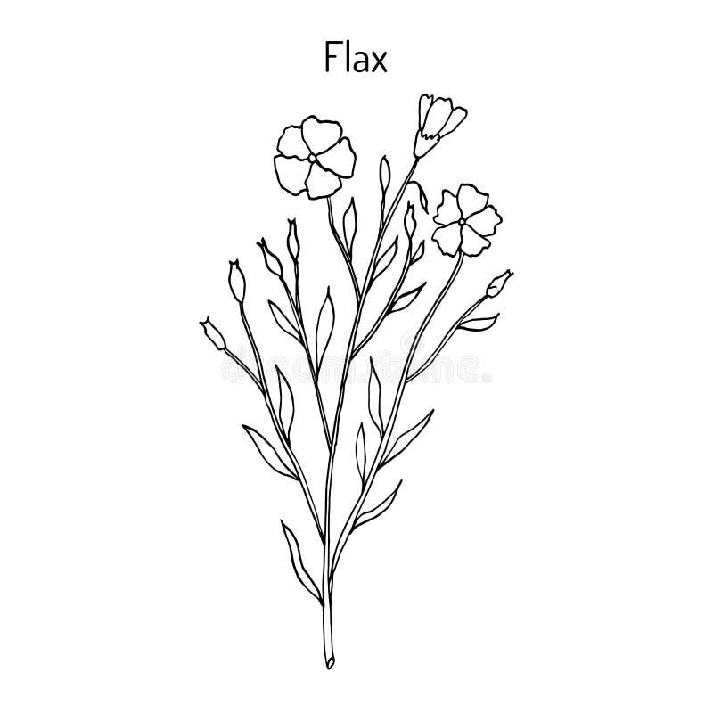 Planta do linho com flores ilustração royalty free