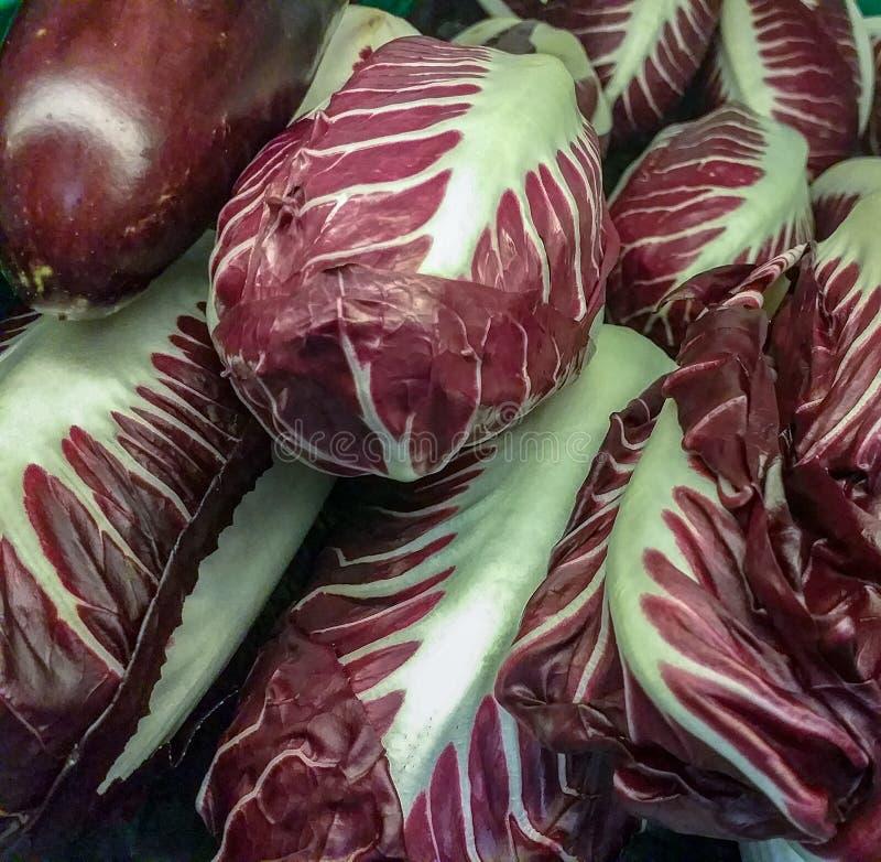A planta do radicchio, o nome científico Chicorium Intybus, pertence à família composta, um grupo de chicória Ao grupo de r fotos de stock