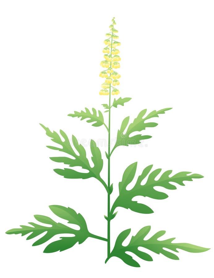 Planta do Ragweed ilustração do vetor