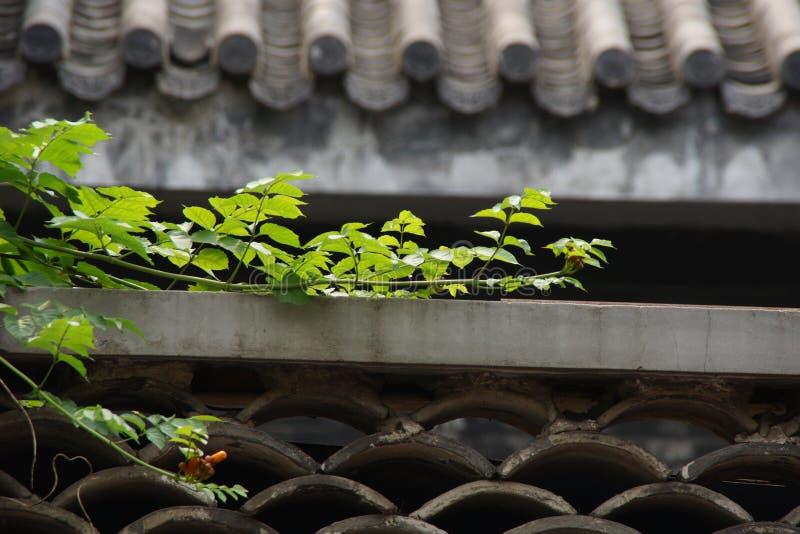 Planta do telhado imagens de stock royalty free