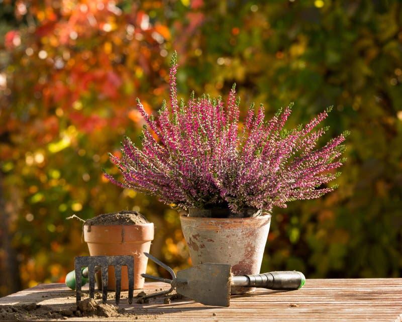 Planta e equipamento de jardinagem na tabela foto de stock royalty free