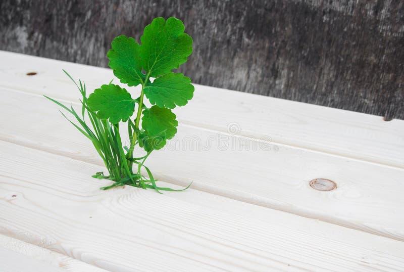 Planta e grama na opinião de ângulo de superfície de madeira fotografia de stock