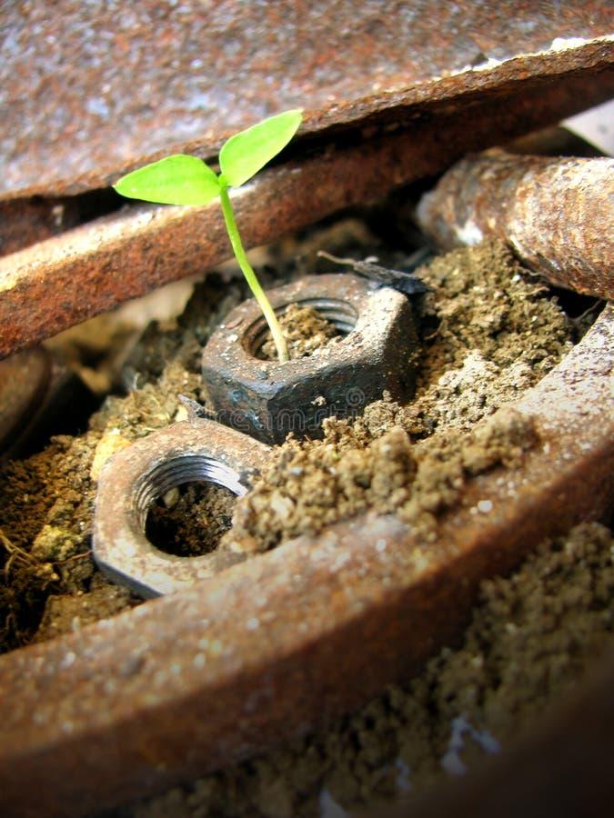 planta e metal corroído fotos de stock royalty free