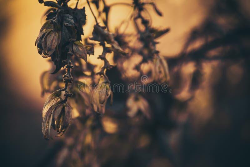 Planta e por do sol foto de stock royalty free