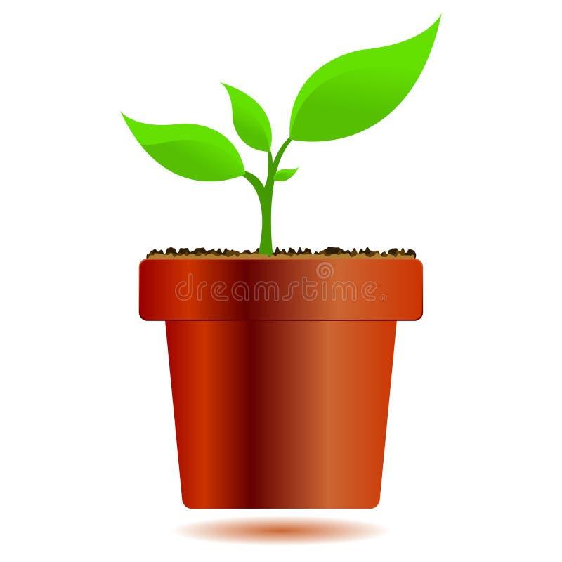 Planta em um vaso ilustração stock
