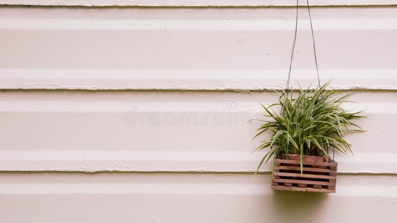 A planta em uma parede fotos de stock royalty free