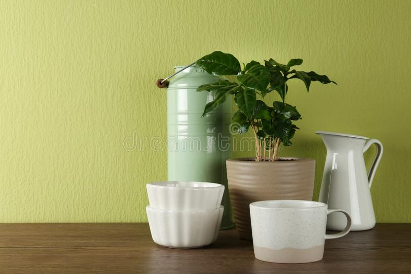 Planta en conserva y sistema de artículos de cocina en la tabla de madera cerca de la pared verde Dise?o interior moderno foto de archivo