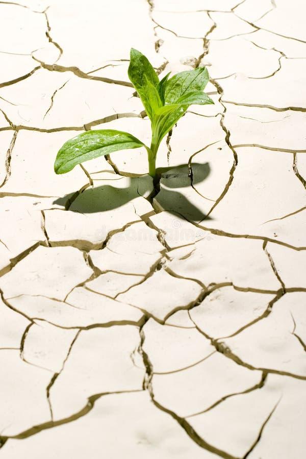 Planta en desierto imagen de archivo