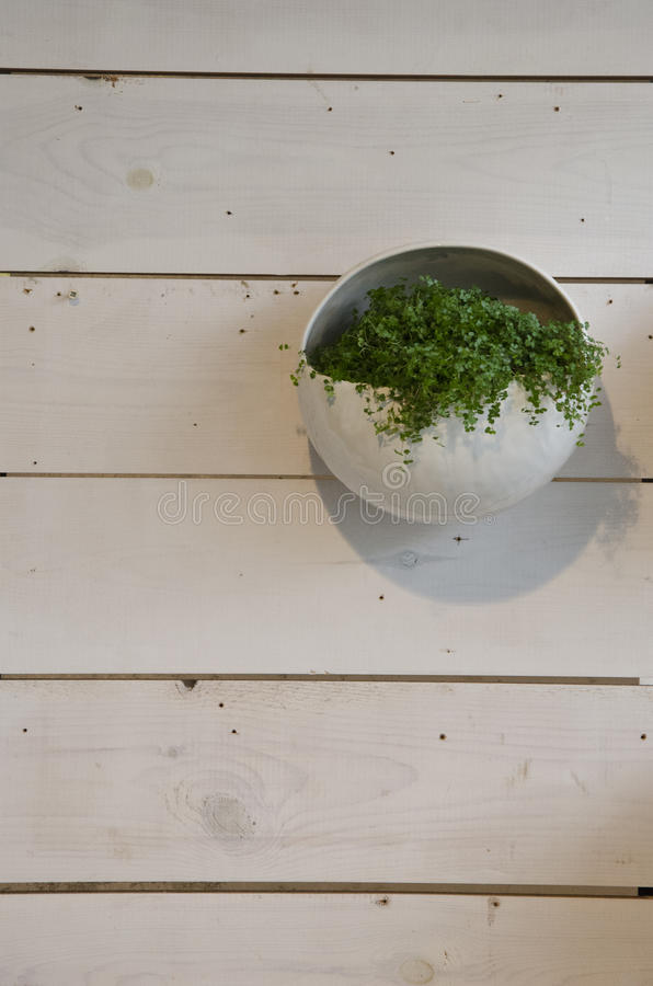 Planta en el pote colgado en el panel de madera fotografía de archivo libre de regalías