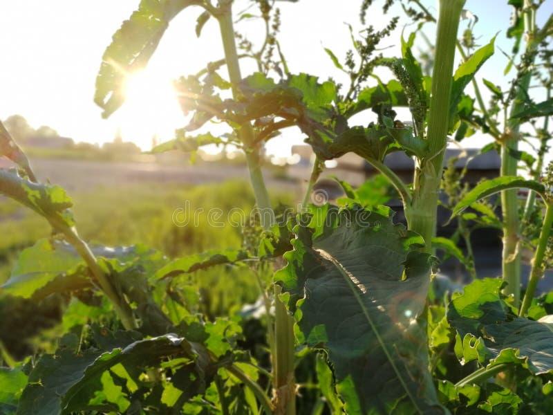 Planta en el sol fotografía de archivo libre de regalías