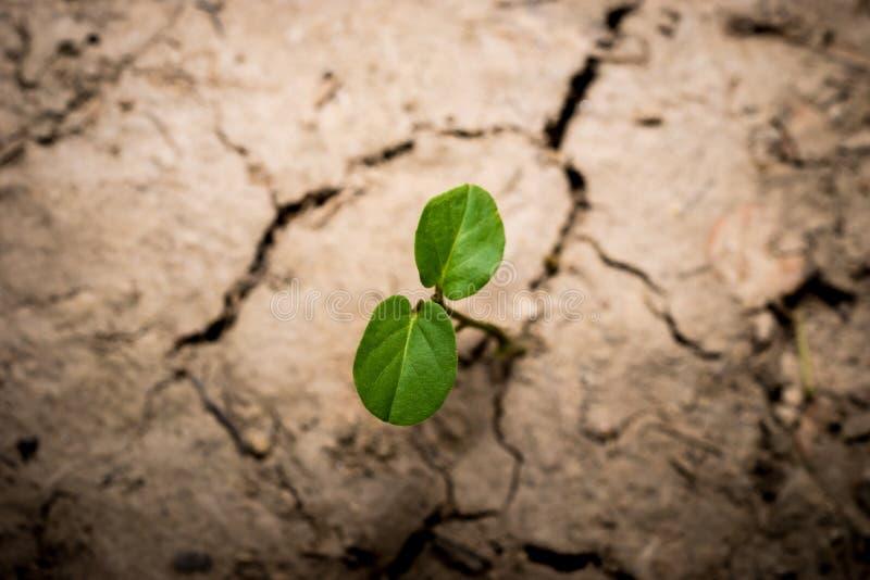 Planta en fango agrietado secado foto de archivo