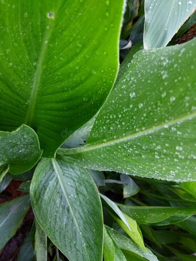 Planta en la estación de lluvias en la India imagen de archivo