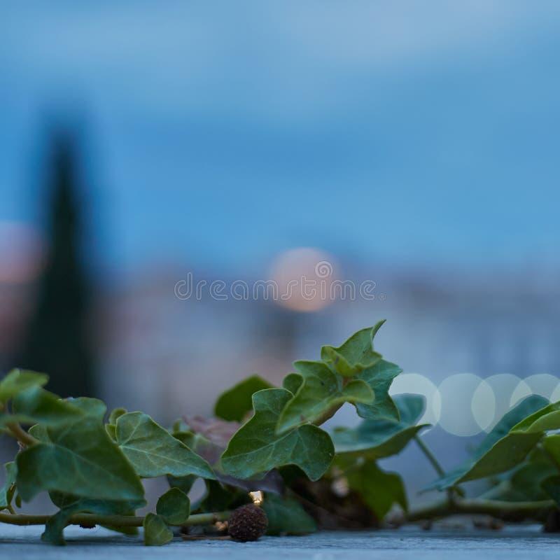 Planta en la puesta del sol en el Plaka Grecia fotografía de archivo libre de regalías