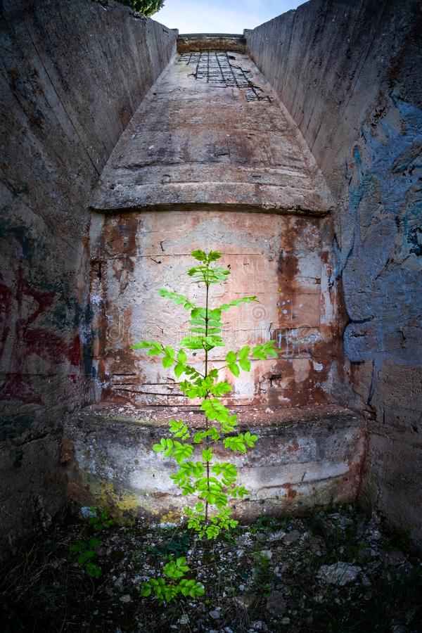 Planta en mina perdida de la bauxita del puerto del lugar cerca de Rabac, Eslovenia imágenes de archivo libres de regalías