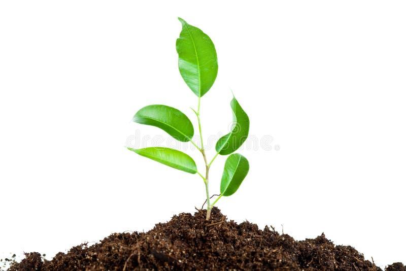 Planta en suelo imagenes de archivo