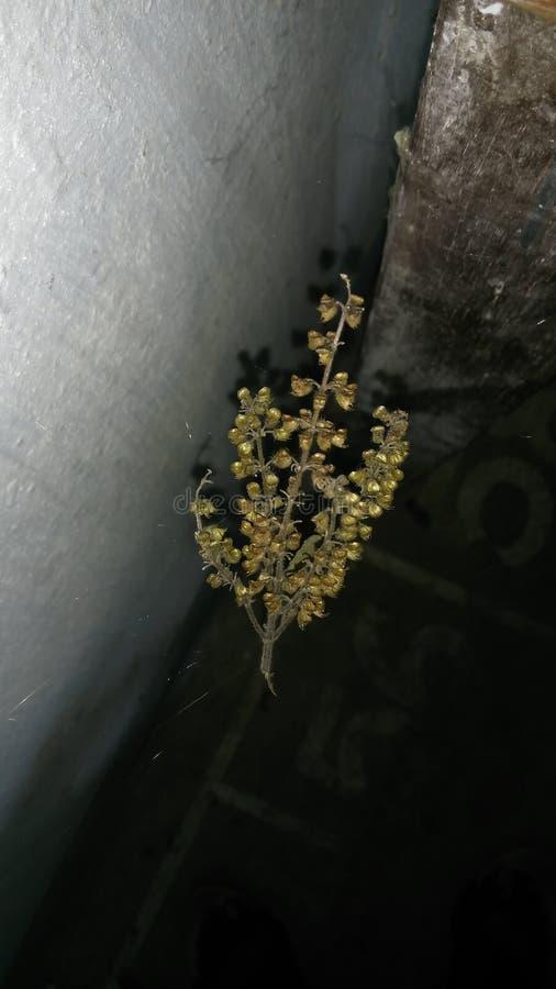 Planta en tecleo impresionante del agua profunda apenas imagen de archivo libre de regalías