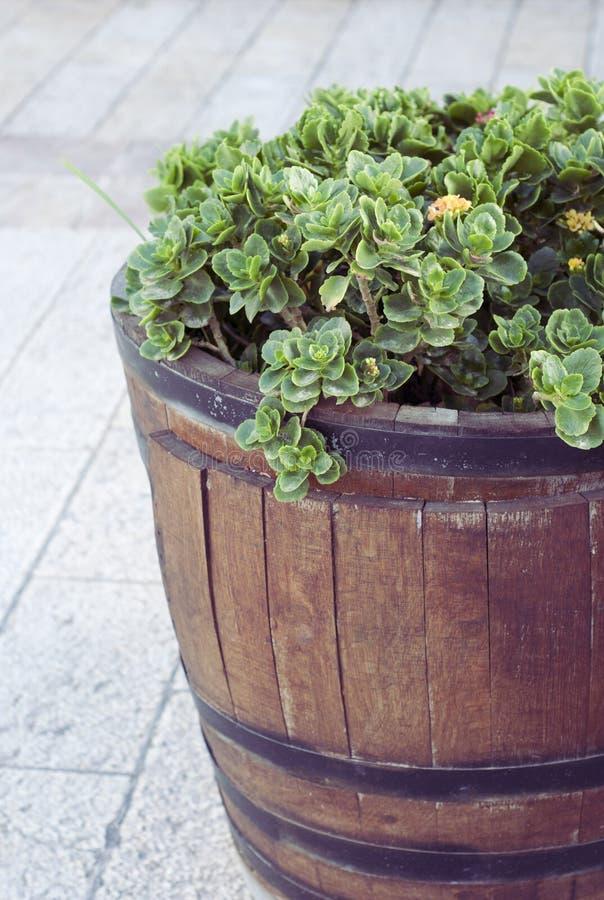 Planta en un barril imagenes de archivo