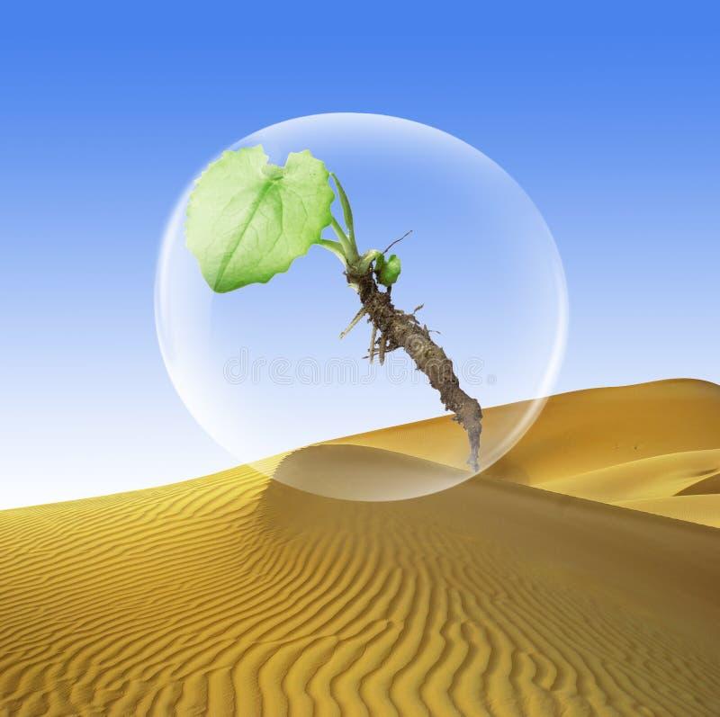 Download Planta en una burbuja stock de ilustración. Ilustración de arena - 7289943