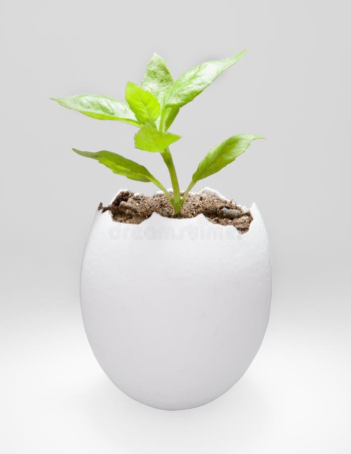 Planta en una cáscara de huevo fotografía de archivo libre de regalías