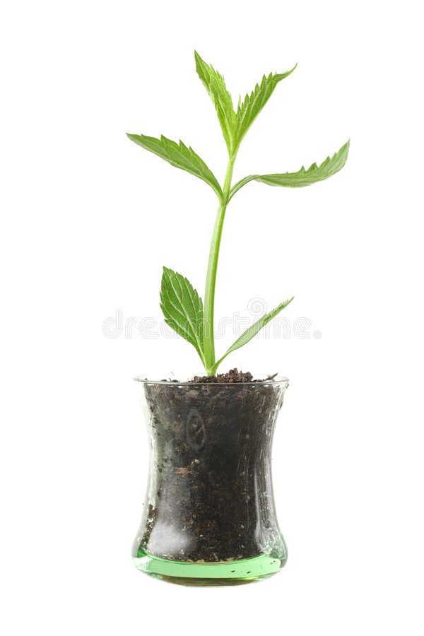 Planta en vidrio foto de archivo