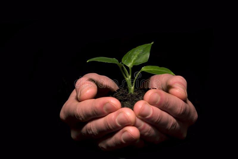 Planta entre as mãos imagem de stock royalty free