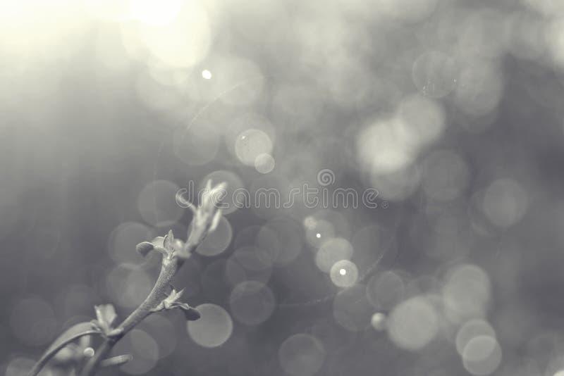 Planta entre a luz do por do sol imagem de stock