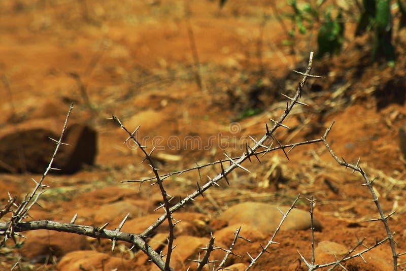 Planta espinosa al aire libre fotografía de archivo