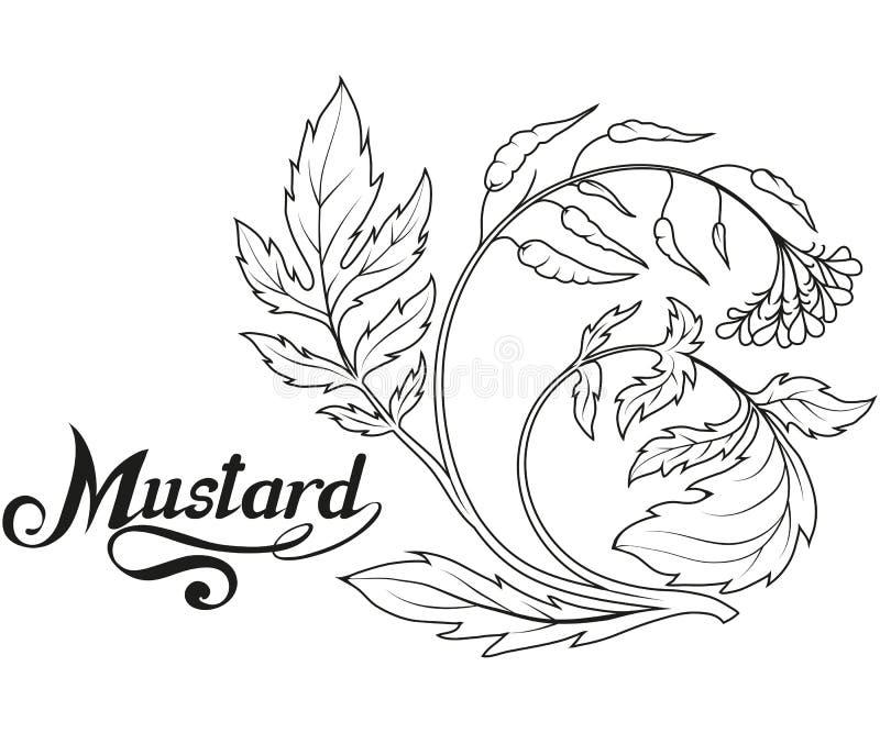 Planta exhausta de la mostaza de la mano, ingrediente picante, logotipo de la mostaza, alimento biológico sano, mostaza de la esp stock de ilustración