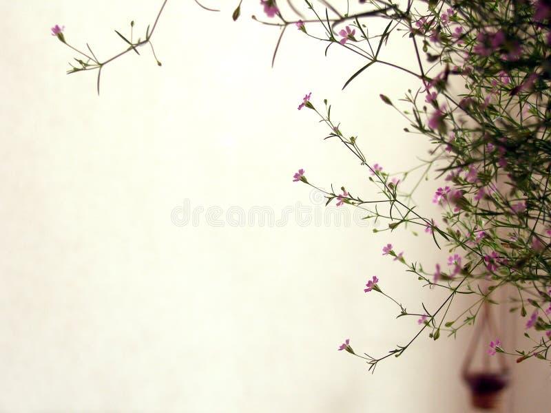Planta floreciente en balcón foto de archivo libre de regalías