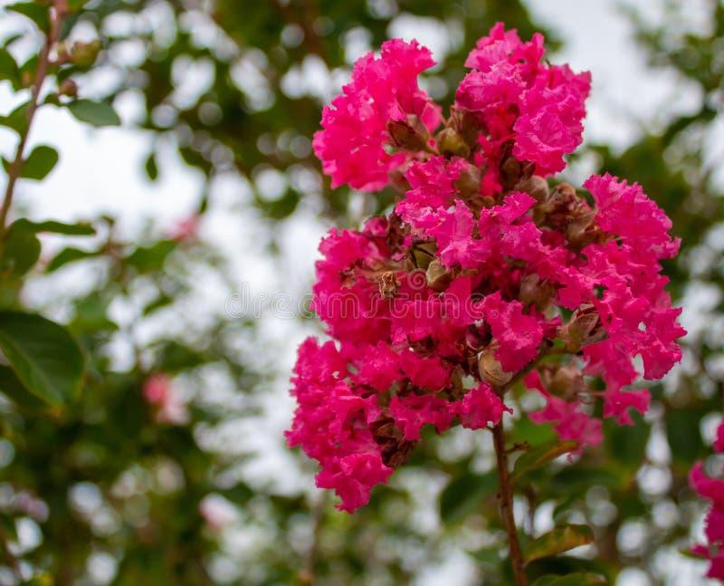 Planta floreciente en el verano de la Florida foto de archivo
