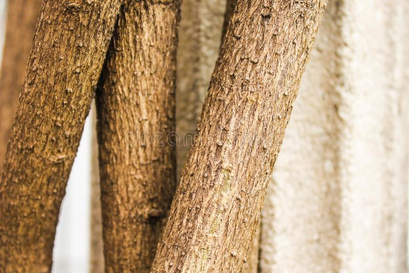 Planta Forest Ecology Fall Planting de madera del tronco fotos de archivo