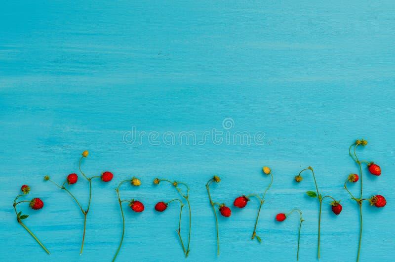Planta fresca con las bayas de fresas salvajes, fresa salvaje del bosque, visión superior fotografía de archivo libre de regalías