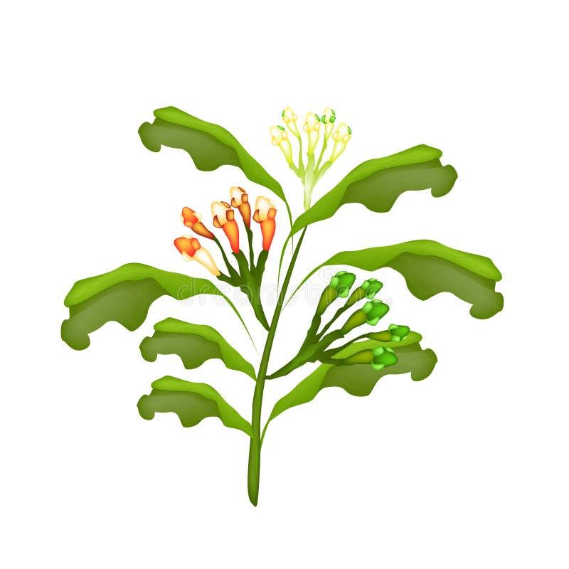 Planta fresca del clavo en un fondo blanco ilustración del vector