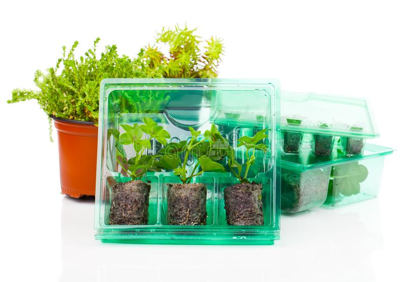 Planta frondosa pequena, imagem de stock royalty free