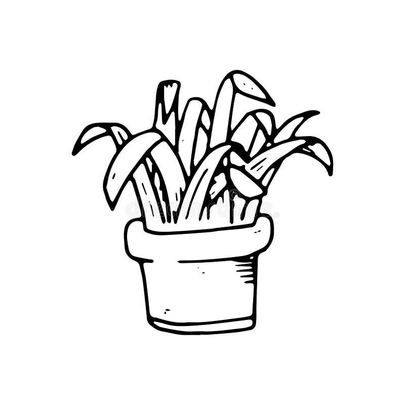 Planta Handdrawn de la casa en icono del garabato del pote Sketc negro dibujado mano stock de ilustración