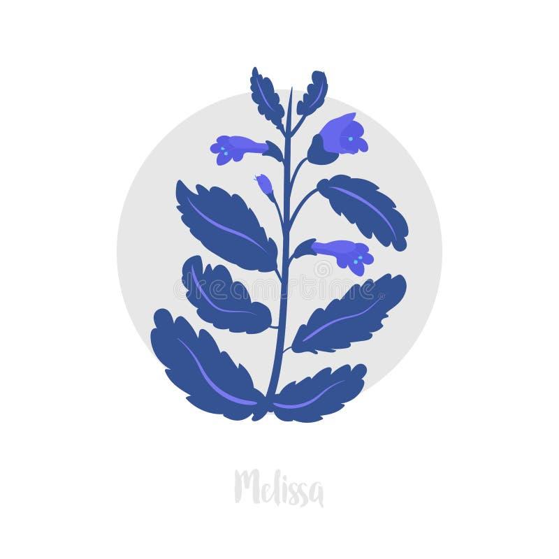 Planta herbácea de Melissa Ramita de la hierba picante floreciente fresca Ilustración del vector También bálsamo de limón, bálsam fotografía de archivo libre de regalías