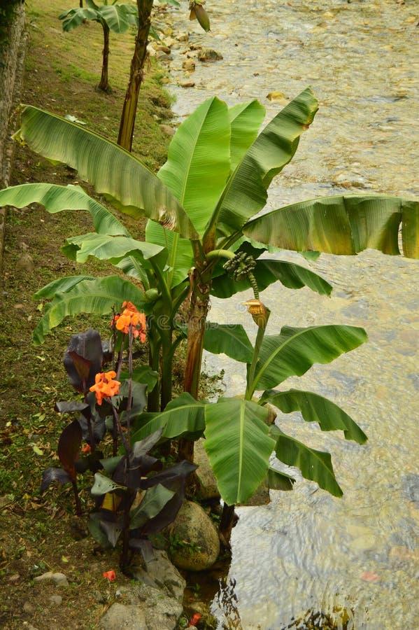 Planta hermosa en el banco del río místico en la ruta de Camin Encantau en el consejo de Llanes Naturaleza, viaje, paisajes, imagen de archivo