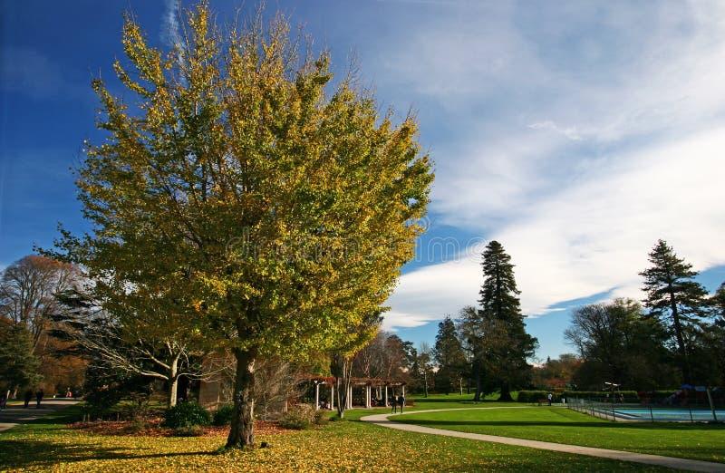 Planta idílica en los jardines botánicos de Christchurch, Cantorbery, isla del sur, Nueva Zelanda del otoño fotografía de archivo libre de regalías