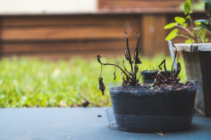 Planta inoperante no potenciômetro no concreto com fundo da grama e da madeira fotografia de stock royalty free