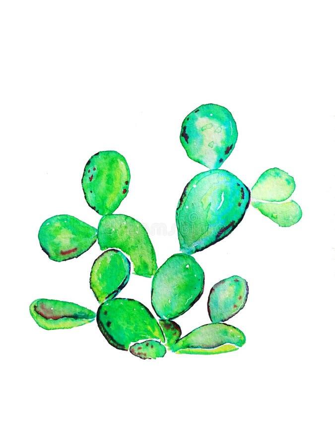 Planta joven del cactus del higo chumbo Ejemplo de la trama de la acuarela imagenes de archivo