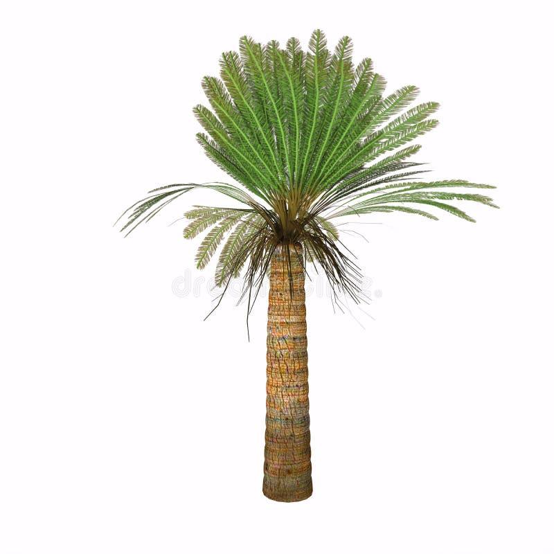 Planta jurásica del Cycad ilustración del vector
