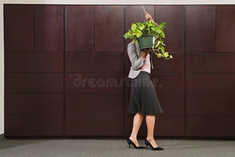 Planta levando da mulher de negócio fotografia de stock