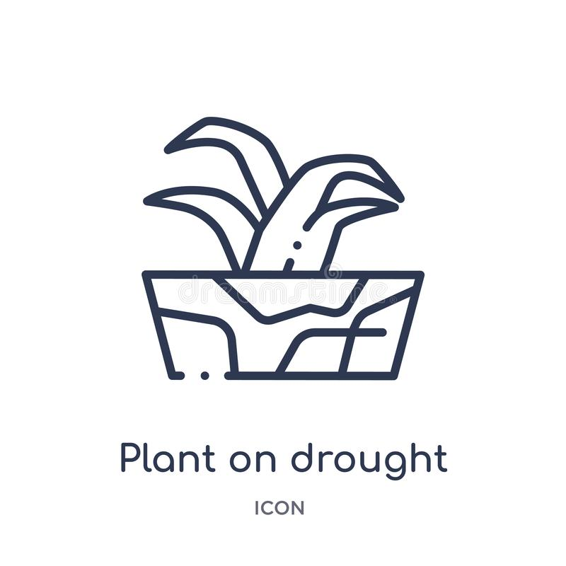 Planta linear no ícone da seca da coleção do esboço da meteorologia Linha fina planta no ícone da seca isolado no fundo branco ilustração royalty free