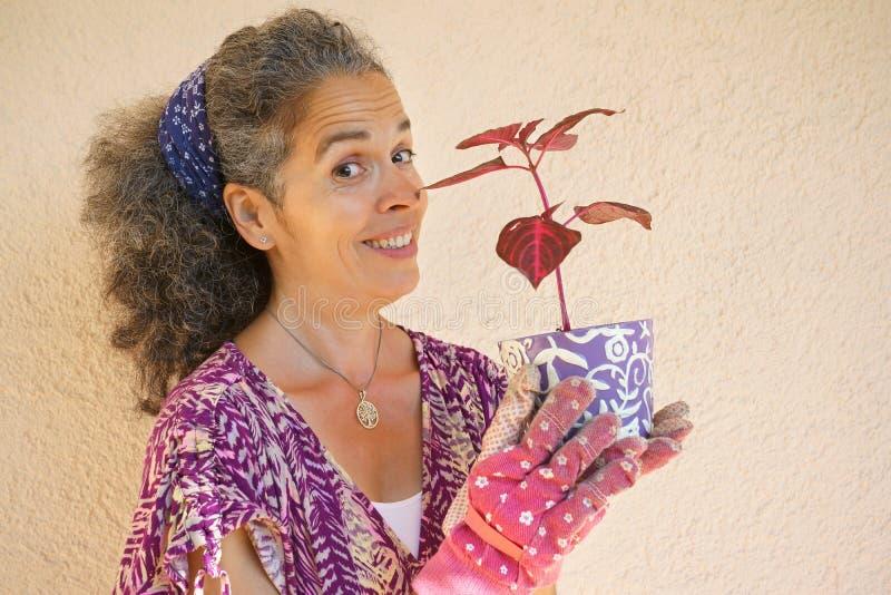Planta madura expressivo da terra arrendada da mulher no potenciômetro de flor fotos de stock