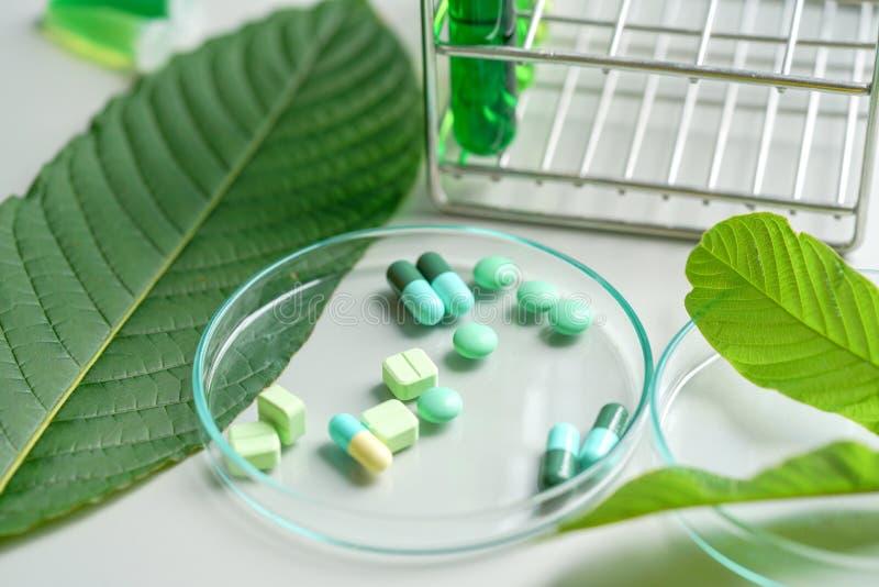 Planta medicinal do kratom do korth do speciosa de Mitragyna com os comprimidos no trabalho fotos de stock royalty free